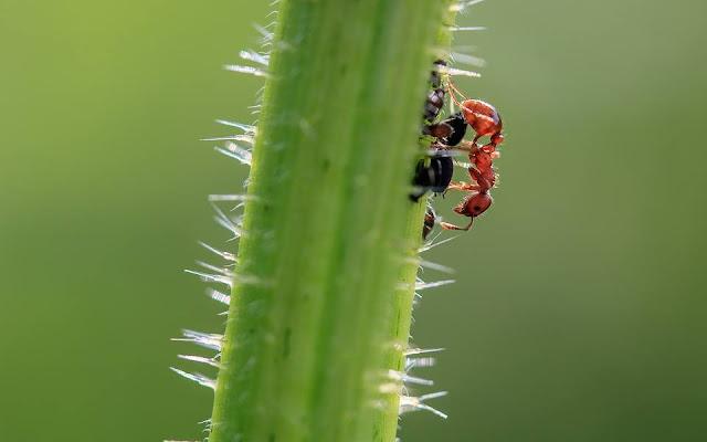 النمل،النمل الأبيض،مكافحة النمل الأبيض،النمل الأسود،النمل الأحمر،تزاوج النمل،النمل الطائر،النمل الأبيض الطائر،انتشار النمل،بيض النمل،ملكة النمل،أضرار النمل الأبيض،أعشاش النمل،طعام النمل