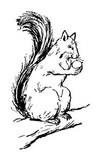squirrel image illustration digital clip art