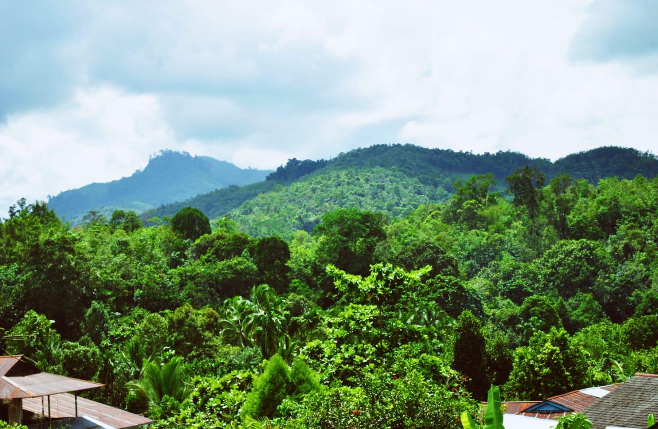 Mengapa Hutan Indonesia Disebut Paru Paru Dunia - Sebutkan Itu