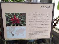 Bromeliad section - Kyoto Botanical Gardens Conservatory, Japan