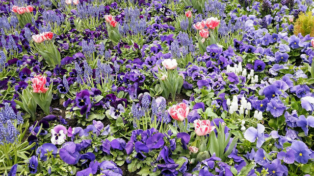 Visit Helsinki the City of flowers