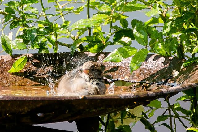 Vogelbad aus Pflanzschale