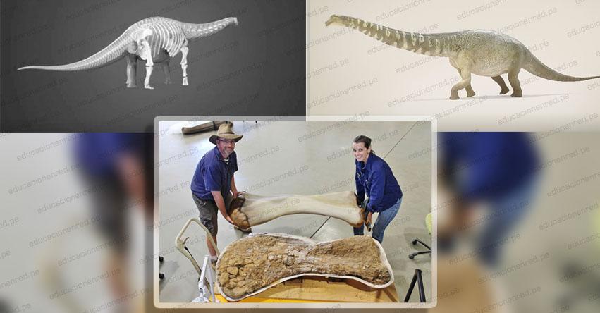 Descubren los restos del dinosaurio más grande de Australia y uno de los de mayor tamaño del mundo