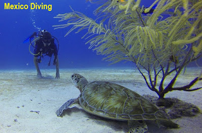 Scuba Diving While Vacationing in Mexico
