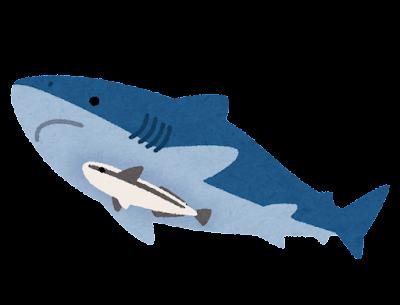 サメと泳ぐコバンザメのイラスト