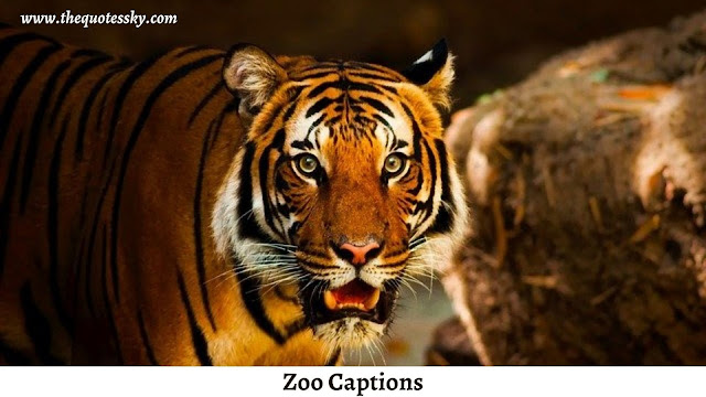 250+⭐Zoo Captions For Instagram ⭐[ 2021 ] Also Zoo Puns & Quotes