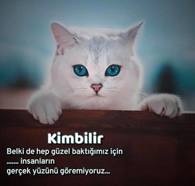 kedi, mavi gözler, pati, tırmık, hayvan sevgisi, güzel görmek, insanların gerçek yüzü, sahtekar, ikiyüzlü, günün sözü, güzel sözler, özlü sözler, anlamlı sözler