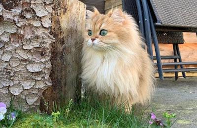 Sifat Kucing BLH