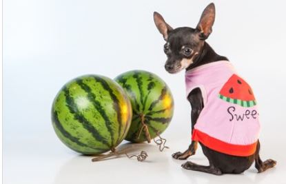 CAN DOG EAT WATERMELON AND GRAPES