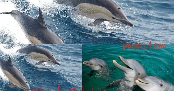 Filosofi Dolphin