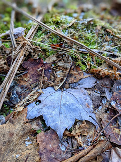 Ice Crystals And Fallen Maple Leaf On Moss