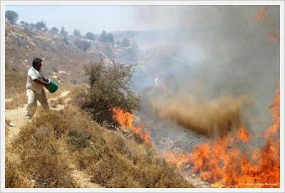 http://cnmbvc.blogspot.com/2016/11/palestina-bantu-israel-padamkan-api.html