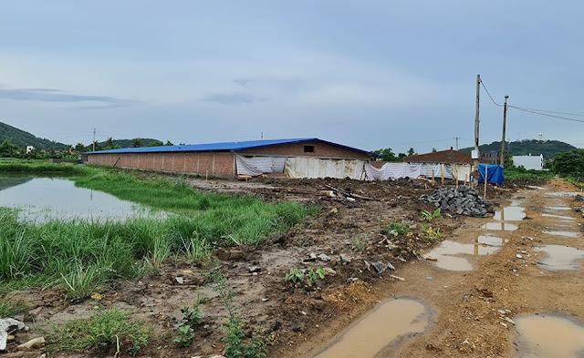 Hải Phòng: vợ cựu Chủ tịch phường xây dựng trái phép trại chăn nuôi lợn