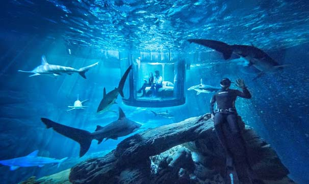 Close by the Eiffel Tower, the visitors sleep with the sharks in the underwater shark tank. A partial association with Ubi Bene, a French firm and Airbnb has created an underwater suite that allows 2 persons to sleep in a glass capsule. A glass capsule is 33 feet underwater inside a 3 million liter water tank, which is encircles by 35 sharks. However, be watchful that in this place, besides being a guest, you have to self-serve yourself as well.