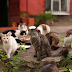 DREAM JOB OFFERS OPPORTUNITY TO MOVE TO A GREEK ISLAND AND GET PAID TO TAKE CARE OF 55 CATS