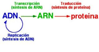 Biomoléculas, Células, Metabolismo y Neurona