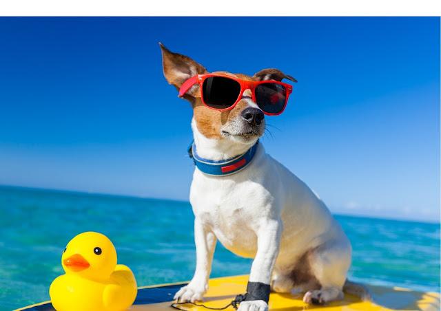 cachorro surfando no mar