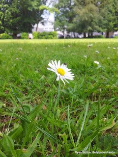 Single Daisy Flower
