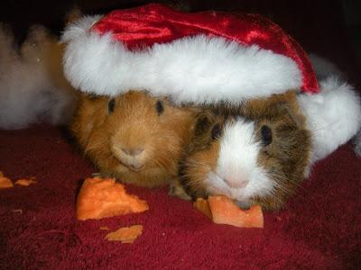 Imagenes Animalitos Navidad