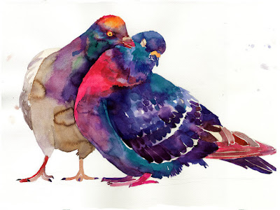 pigeons - colorful bastrack - water colour