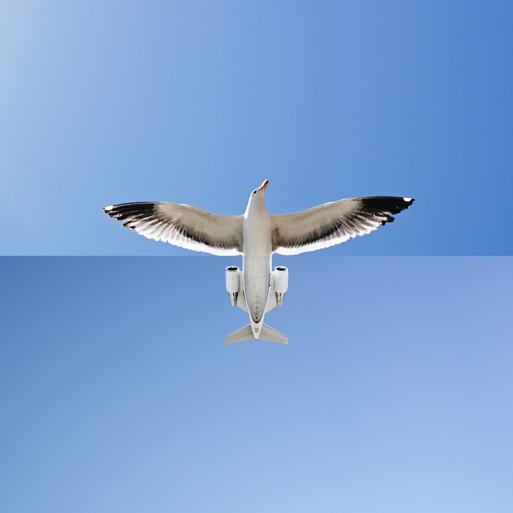 18-Seagull-Airplane-Stephen-Mcmennamy-Mash-up-Photographs-with-Combophotos-www-designstack-co
