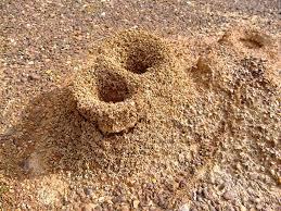 Lubang pasir semut, rajin macam semut,