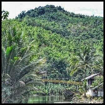 Hutan di pegunungan meratus