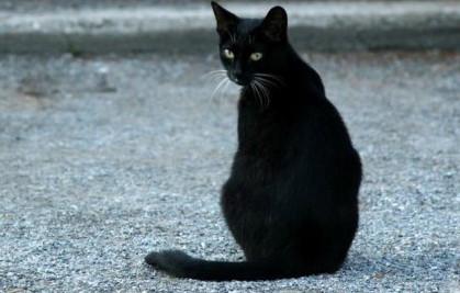 Mistik Misteri Kucing Hitam