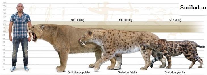Una Mascota Por Dia Tigre Dientes De Sable Lo Que No Sabías Sobre El Smilodon