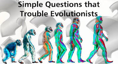 "When Darwin's Flying Monkeys© swoop down and present ""facts"", evolution doubters can bother them with some simple questions."