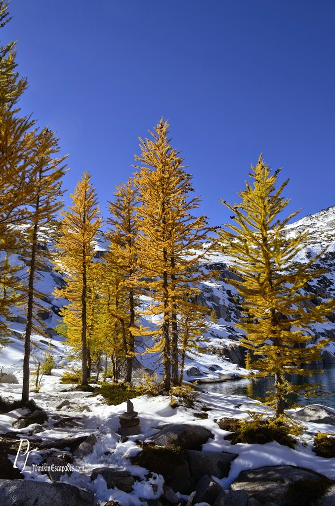 larches in enchantments in leavenworth washington