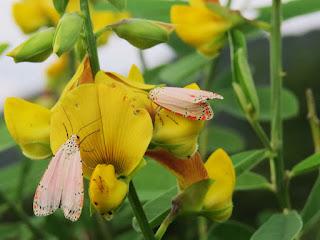 fotos de mariposas por Cesar Augusto Rincon Gonzalez