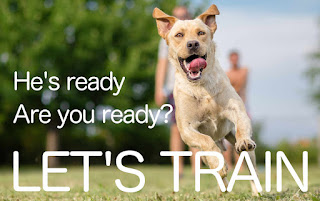 Dog Training Advice - Learning How To Train Your Dog Effectively