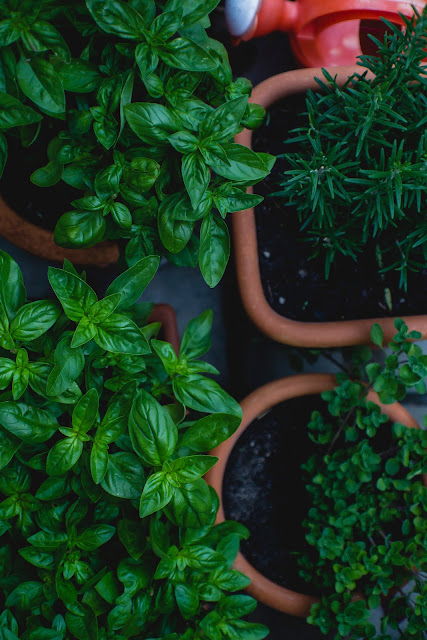 Potted Herbs | Photo by Markus Spiske via Unsplash
