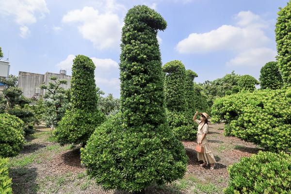 彰化田尾巨大鵝群造型羅漢松園,育盛種苗園可愛的像童話世界