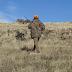 Murcia aprueba el Decreto que regula los cotos intensivos de caza