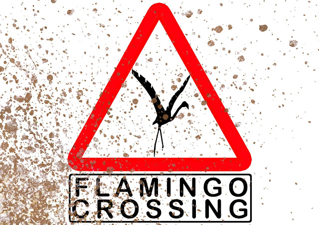 flamingo crossing tracklocross series