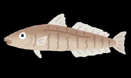 キスのイラスト(魚)
