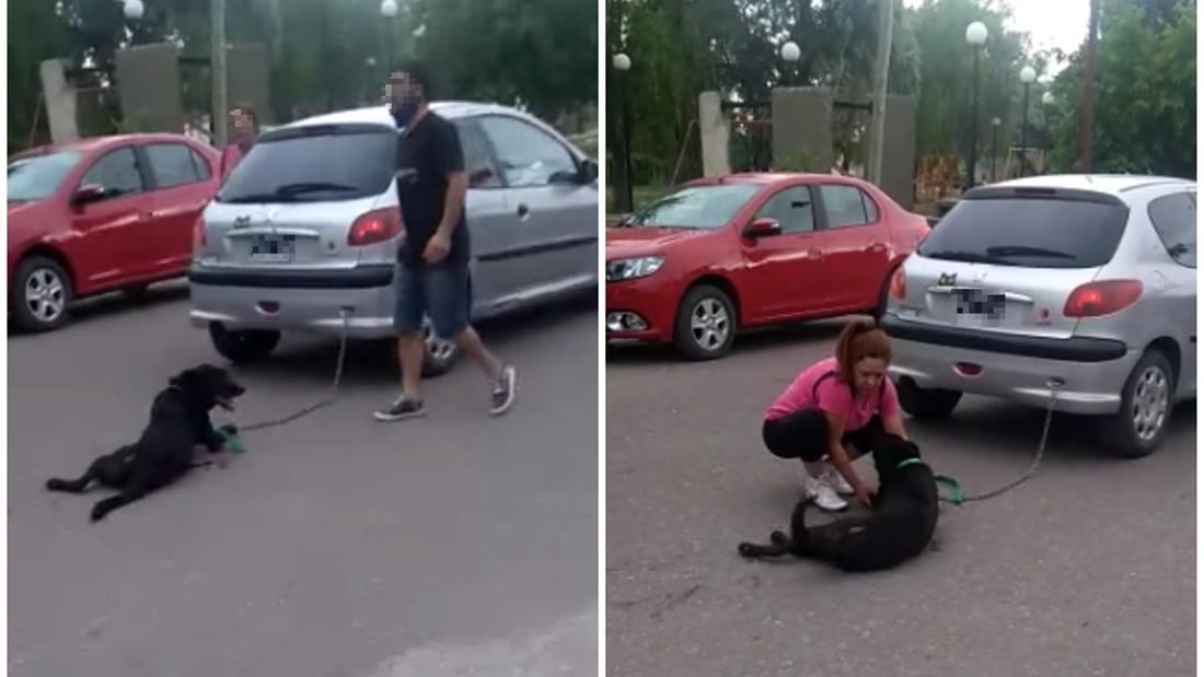 Una docente encadeno a su perro al auto y lo arrastro