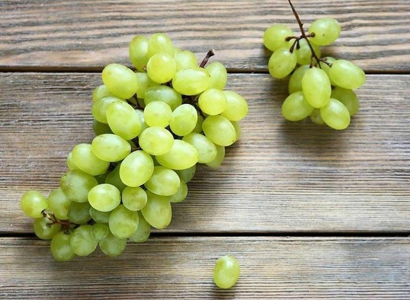 Bibit Tanaman buah anggur hijau Pematangsiantar