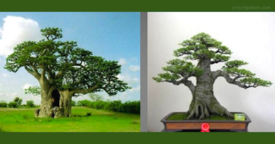 Bonsai Inspiration 3