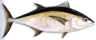 Fish Information Indonesia September 2012