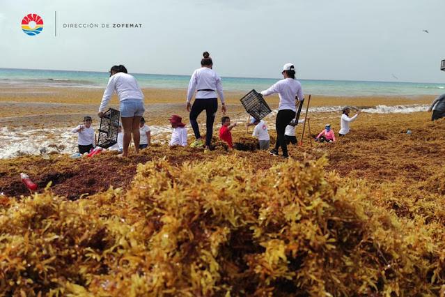 Sigue recalando sargazo en playas de la zona hotelera de Cancún