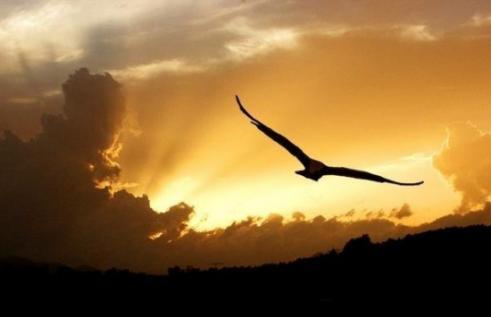 Como um ruflar de asas
