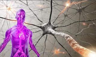 Susunan Saraf Pusat Yang Penting Untuk Diketahui Obat Obat Yang Bekerja Berkaitan Dengan Sistem Saraf Pusat obat obat yang mempengaruhi sistem saraf pusat Inflamasi, Nyeri dan Demam NSAID obat analgetik volunter dan involunter  12 pasang saraf kranial dan 31 pasang saraf spinal  31 pasang saraf spinal dan fungsinya  31 saraf spinal dan fungsinya  saraf kepala  urat syaraf manusia  penyakit saraf manusia  gangguan saraf pusat  urat saraf otak  sistim saraf  struktur dan fungsi sel saraf neuron  saraf tubuh  fungsi saraf spinal  gangguan saraf  urat saraf manusia  saraf otak  saraf spinal dan fungsinya  fungsi sel saraf sensorik dan motorik  pengertian saraf mata  fungsi dendrit pada neuron  31 pasang saraf spinal  saraf spinal  fungsi 31 pasang saraf spinal  ppt sistem saraf pusat  fungsi saraf sensorik dan motorik  neuron terdiri dari tiga bagian yaitu  saraf spinal adalah  pusat saraf  neuron asosiasi  otak saraf