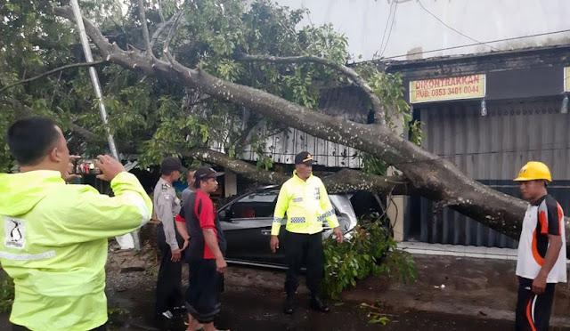 Pohon tumbang menimpa mobil