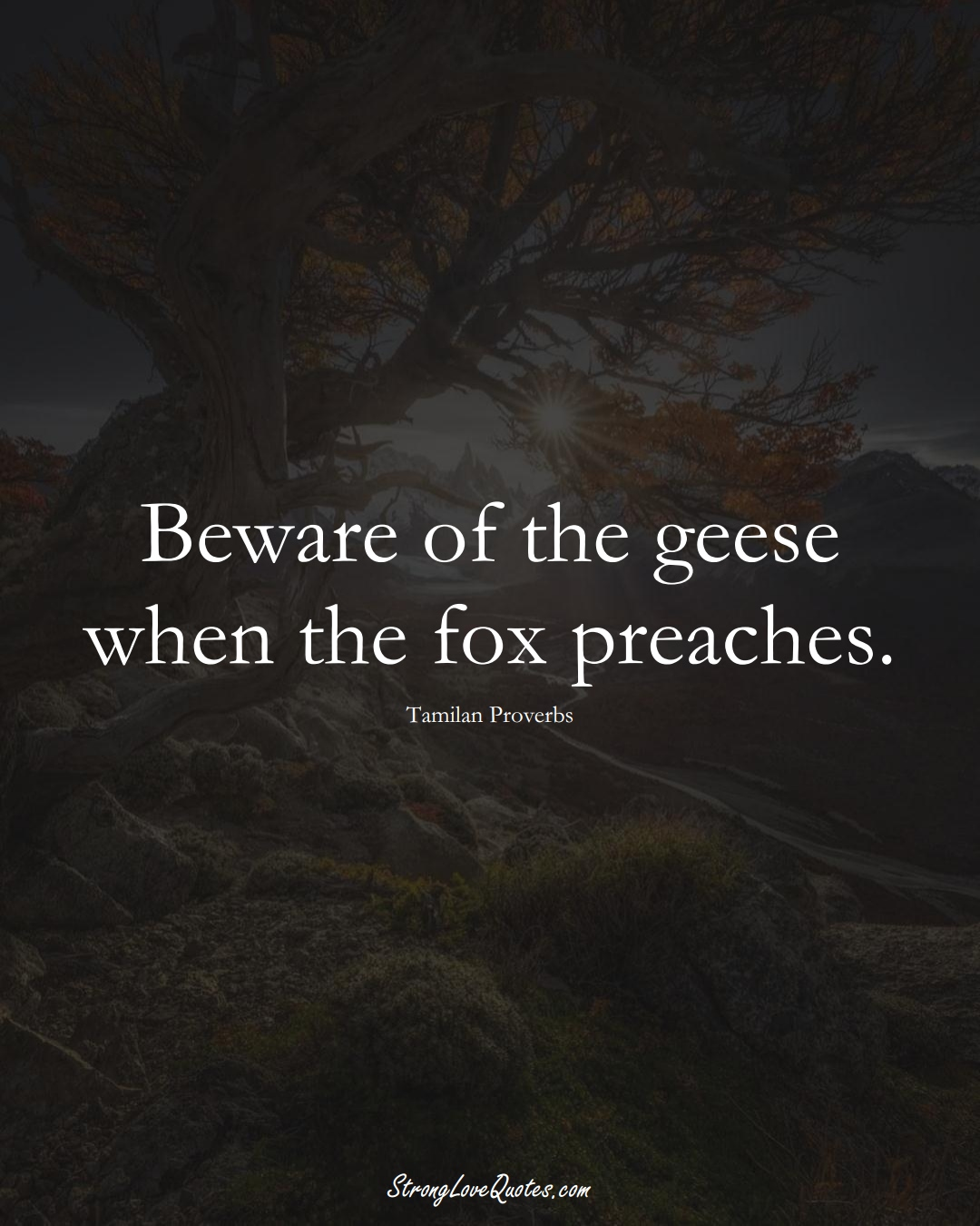Beware of the geese when the fox preaches. (Tamilan Sayings);  #aVarietyofCulturesSayings