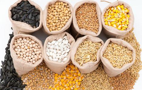 Tìm hiểu về năng lượng khẩu phần trong chế độ ăn của heo