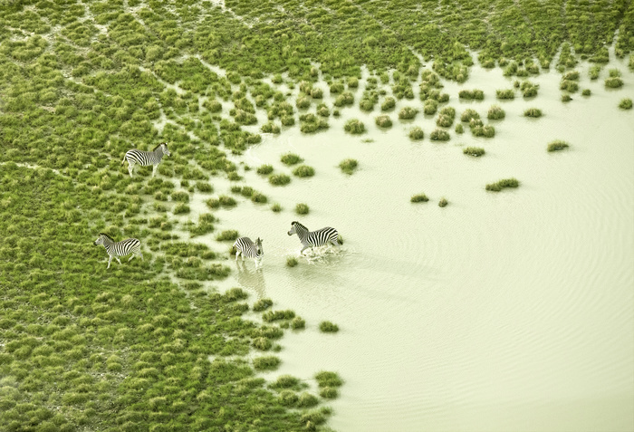 Photography : The African Savannah by Zack Seckler