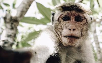 बंदर एक मोबाइल लाया और उसमें इक सीम लगाया
